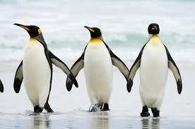 alexander pappas: the penguin walz