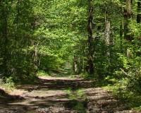 Dobrin, Alex: Dans la forêt lointaine