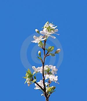 CRENN, Jean-Christophe: A WHITE FLOWER