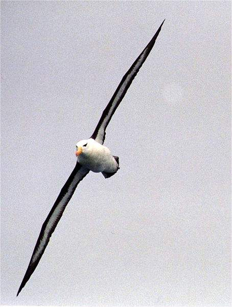 CRENN, Jean-Christophe: BIRD