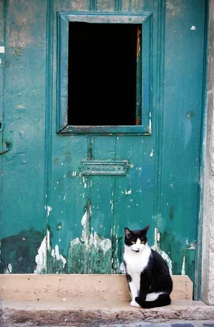 CRENN, Jean-Christophe: THE BLUE CAT