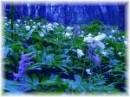 Andrea, Ferrante: Il petalo blu