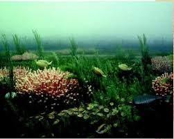 montolio, richard: Precambrian sea