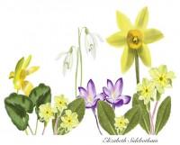 Sidebotham, Elizabeth: April Walzer