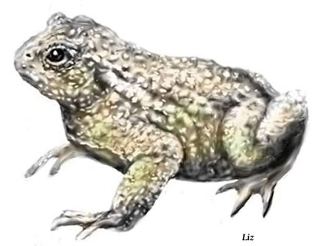 Sidebotham, Elizabeth: A Toad