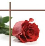 """Anonymous: """"Red is the Rose"""" for Viola & Harp"""