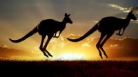 "Saint-Saens, Camille: ""Kangaroos"" from the ""Carnival of the Animals"" for Strings"