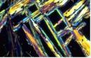 Metivier, Matthieu: Contrepoint n°6 - 1ère Espèce + nappes synthétiques optionnelles