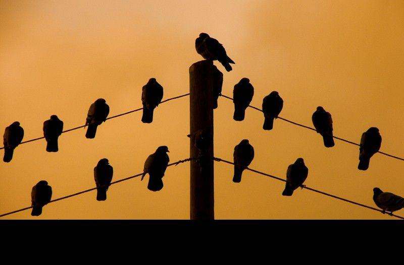 Lorca's birds