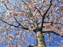 Mozart, Wolfgang Amadeus: Nostalgie du printemps
