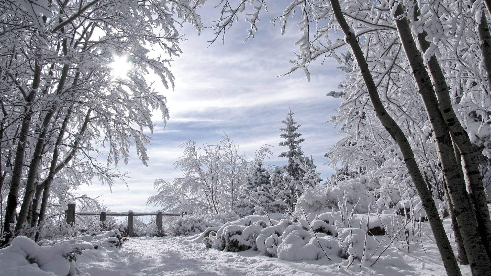 Duffy, Paul: The Light of Winter