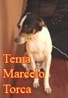 Torcato, Marcelo: Tema