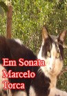 Torcato, Marcelo: Em Sonata