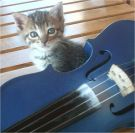 Cat and blue violin